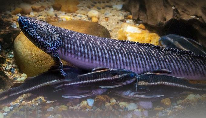 Как рыбу ходить учили