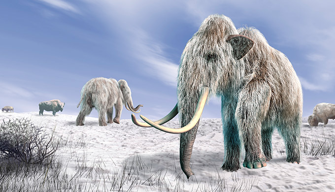 Evidence some woolly mammoths asphyxiated from dust