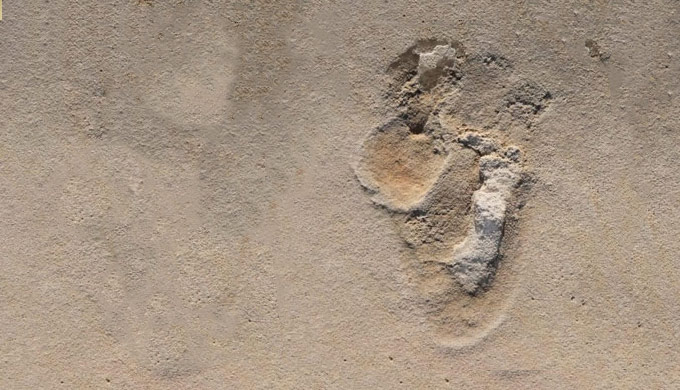 Cretan footprints stomp on human evolution