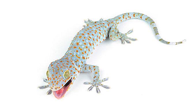Gecko skin microstructure also kills bacteria