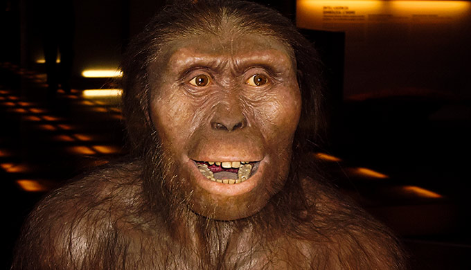 Lucy's baboon backbone