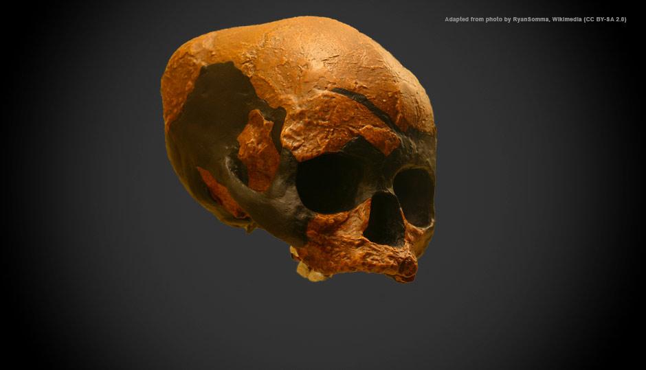 Niah Cave's 'Deep Skull': Teenaged boy or elderly lady?