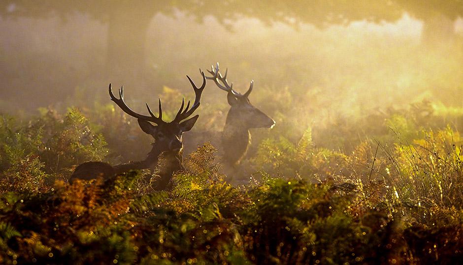 Cannibal deer