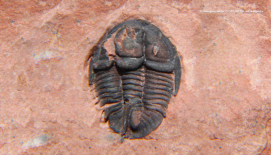 Cambrian explosion points to creation not evolution