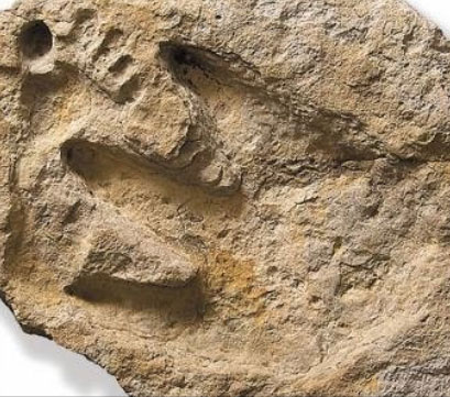 The Alvis Delk human-dino footprints artefact