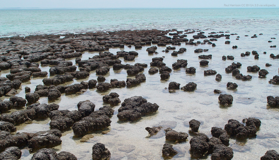 Are all fossil stromatolites biological?