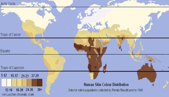 3c7856b08 The origin of the human races - creation.com