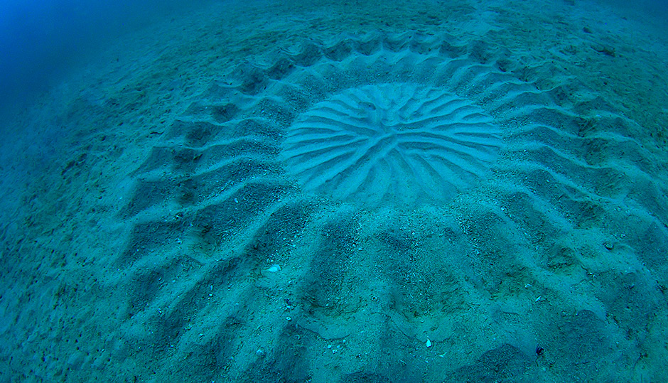 Seabed circles 'Whodunnit?' solved