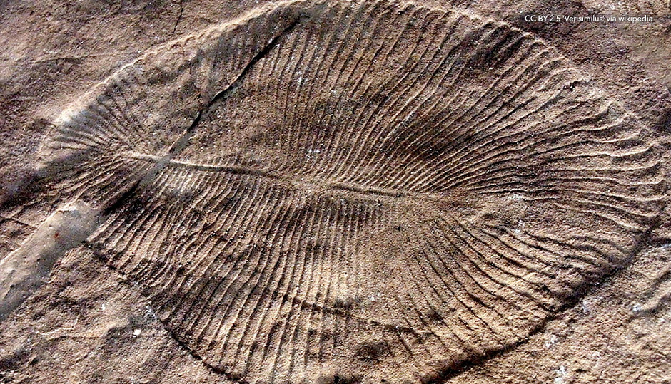 Precambrian geology and the Flood