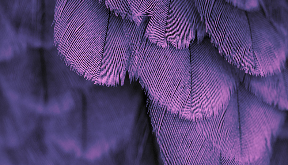 Microstructural architecture of feathers makes them tough