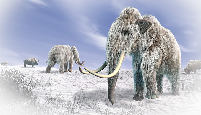 Mammoth—riddle of the Ice Age