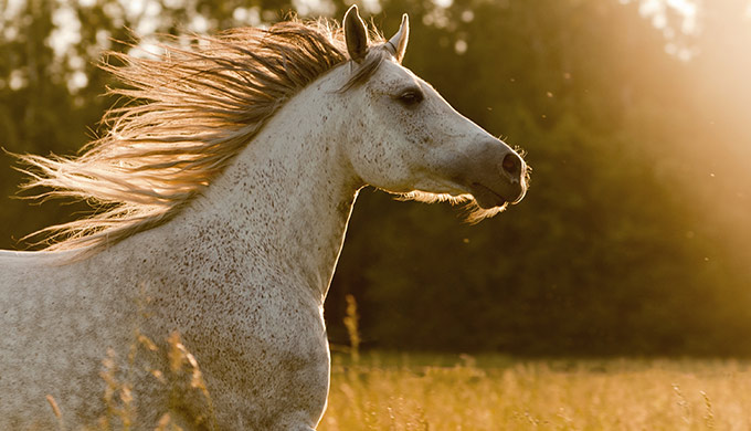 The non-evolution of the horse