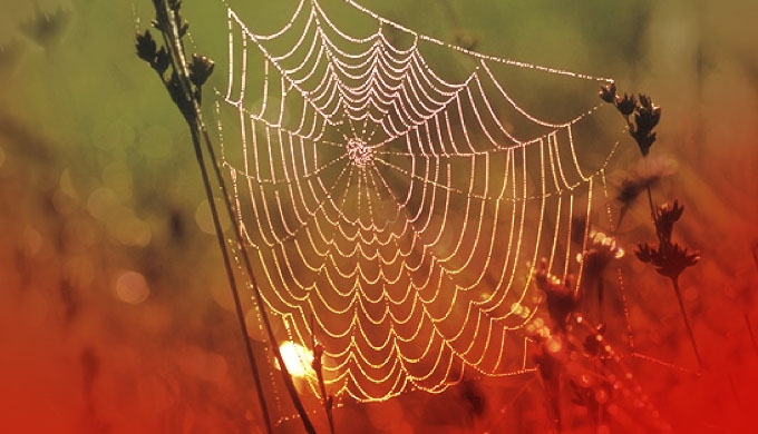 Gods webspinners give chemists free lessons-Creation Magazine (spider silk)