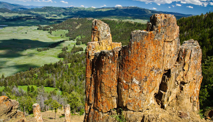 The Yellowstone petrified forests