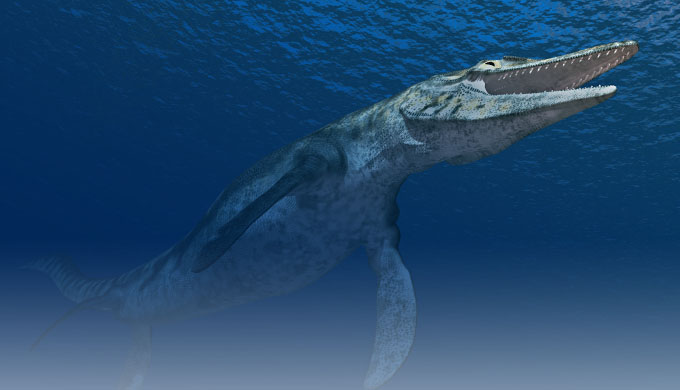 Sea monsters … more than a legend?