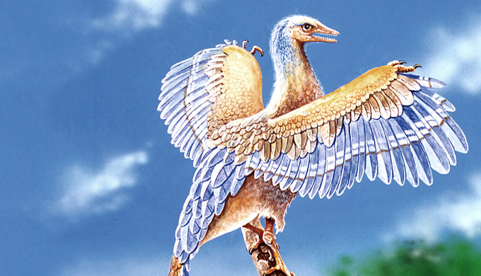 Creation in-depth: <em>Archaeopteryx</em>