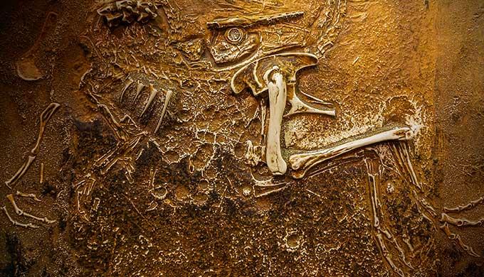 Double-decade dinosaur disquiet