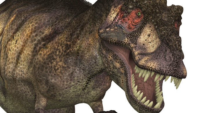 DNA and bone cells found in dinosaur bone