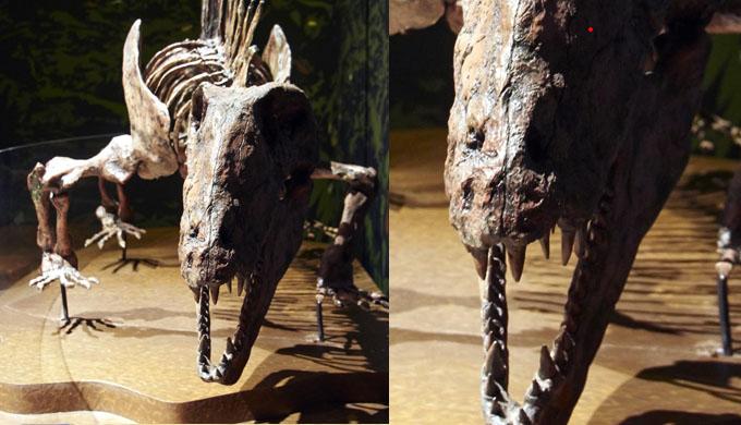 Alter der Dinosaurier Carbon Dating