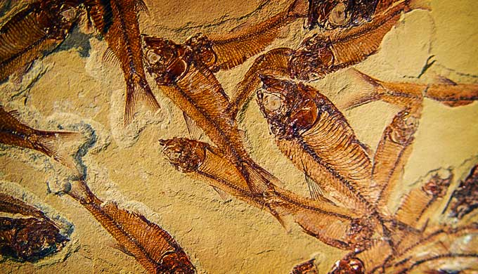 Are there out-of-sequence fossils that are problematic for evolution?