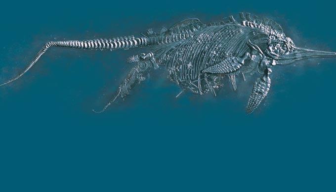 Ихтиозавры: подтверждение недавнего глобального потопа
