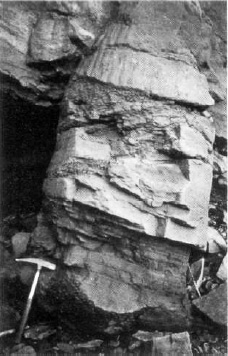 Sandstone cast of an erect lycopod stem exposed at Joggins, Nova Scotia, 1981. Weathering of the contents reveals two intersecting bedding planes attesting the sudden burial of the stem.