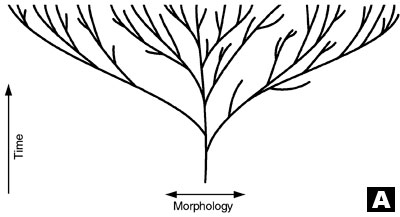 Contrary ideas about phylogeny
