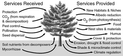 Some service exchanges associated with a tree.