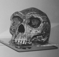 The Broken Hill cranium from Kabwe