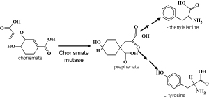 Fig 6. AroQ chorismate mutase is an enzyme used during synthesis of amino acids phenylalanine and tyrosine. (Click on figure to see larger version)