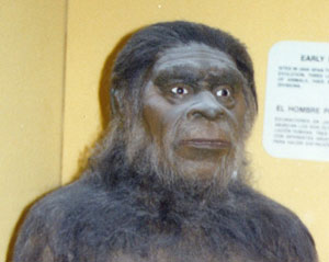 Photo of a 'reconstructed hominid' taken at the San Diego Museum of Man. Rana and Ross believe that God periodically created and inserted such hominids on the earth over the last seven million years, but there is no mention in Scripture about this.