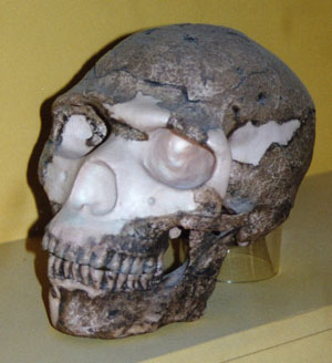 Skhūl 5 skull (cranial capacity of about 1,520 cm3) is regarded by many evolutionists as that of a modern human.  However, in Rana and Ross' human origins model fossils such as these can 'be thought of as nonhuman, bipedal primates that predated humankind' (p. 80).