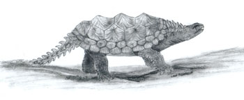 Proganochelys based on fossil evidence