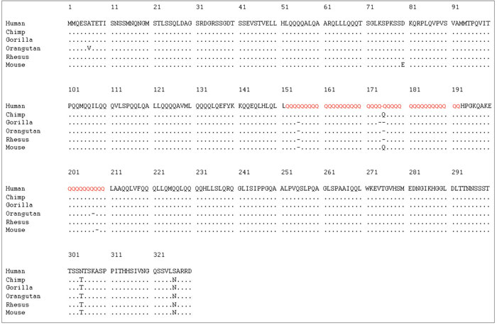 FOXP2 human protein