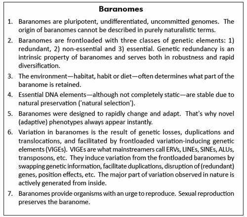 Baranomes