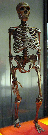 Neandertal reconstruction with bent knees