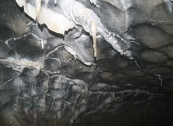 Figure 1. Scallops in Resonance Cave, Vancouver Island, British
