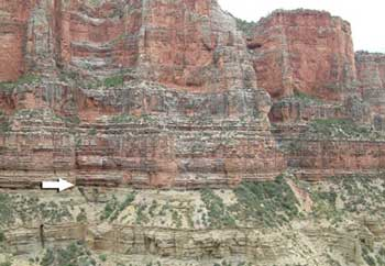 Figure 3. The contact between the Redwall Limestone and the underlying subjacent Muav Limestone (arrow) from the North Kaibab Trail. There are 140 to 160 Ma of missing uniformitarian time at this contact.