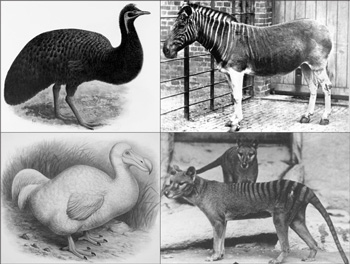 Figure 3. Kangaroo Island Emu (top left), Quagga (top right), Dodo (left) and Tasmanian Tiger (right). Their disappearance has had no measurable impact on the earth or any human community.