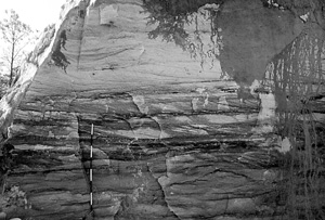 Figure 5. Sidewall along Providence Canyon, Georgia (USA). Uniformitarians assert that these sands were deposited in a mixed-energy barrier island setting cut by tidal inlets.8 Some of the canyon sidewalls display a few sub-vertical Ophiomorpha traces but many more do not. This sidewall exhibits no evidence of any bioturbation where it would be expected within the hypothesized uniformitarian setting. The cross-bedding displayed in the sands indicates this was a high-energy depositional environment. While some trace makers were present in this energetic setting, they had little opportunity to bioturbate the sediments due to rapid deposition and the reworking of the sediments during the later stages of the Flood. Scale in 15-cm divisions.