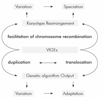 Schematic view of the central role that 'intelligentlydesigned' VIGEs may play in generating variation, adaptations and speciation events in the genomes of living things to induce DNA changes.