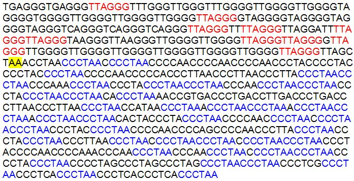 Figure 2. The 798 bp core sequence surrounding the fusion site on human chromosome 2 used for BLASTN searches against the most recent builds of the 