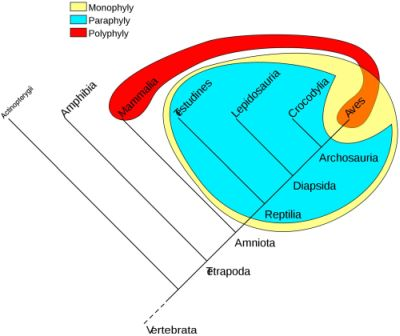 Figure 4. Comparison of phylogenetic groups, showing a monophyly (all descendants of the first reptiles), a paraphyly (descendants of reptiles, 