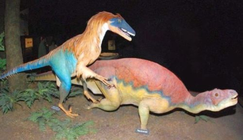 Figure 1. A display of a feathered Deinonychus attacking a duck-billed dinosaur, Museum of the Rockies, Bozeman, Montana.