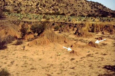 Figure 1. Erosional remnants (two arrowed) left after a flood in South Africa.