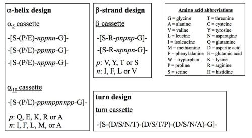 Figure 1. Design of the secondary structure (helix, strand and turn) cassettes later linked to form new artificial genes. Polar and non-polar amino acids are shown as p and n, respectively.14