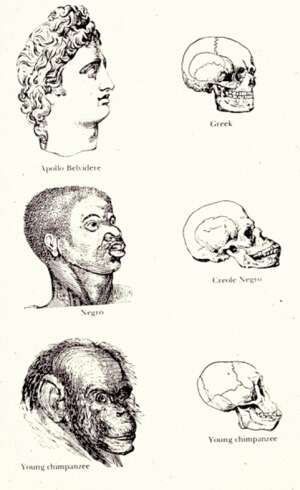 """Pseudowissenschaftliche Darstellung von der sogenannten Evolution menschlicher """"Rassen"""""""