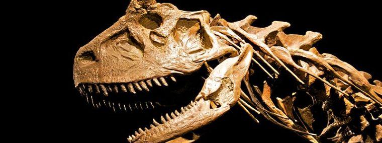 Ένας σκελετός δεινοσαύρων