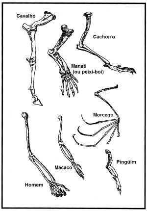 forelimbs diagram