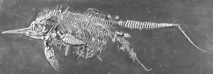 Fossil of ichthyosaur giving birth